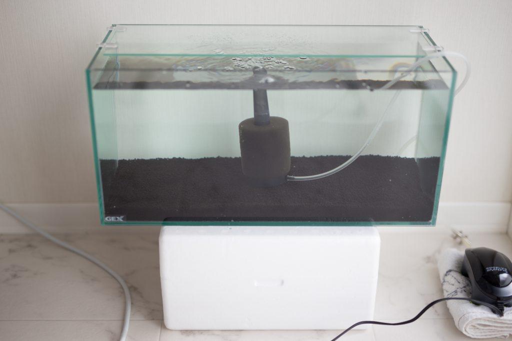 メダカ水槽リセット