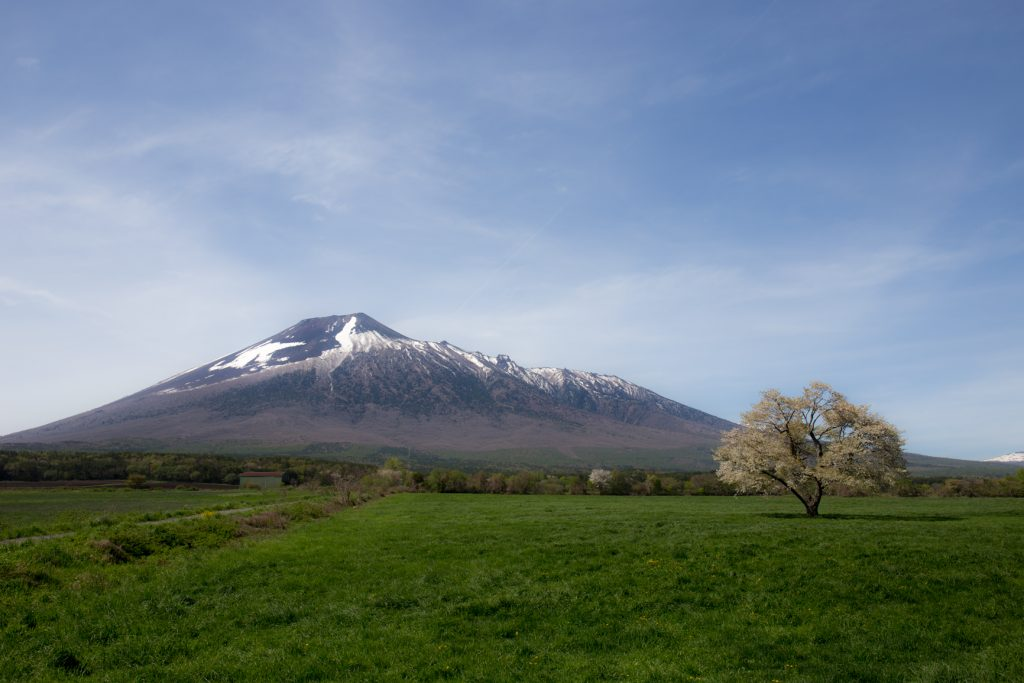 上坊牧野(うわぼうぼくや)の一本桜