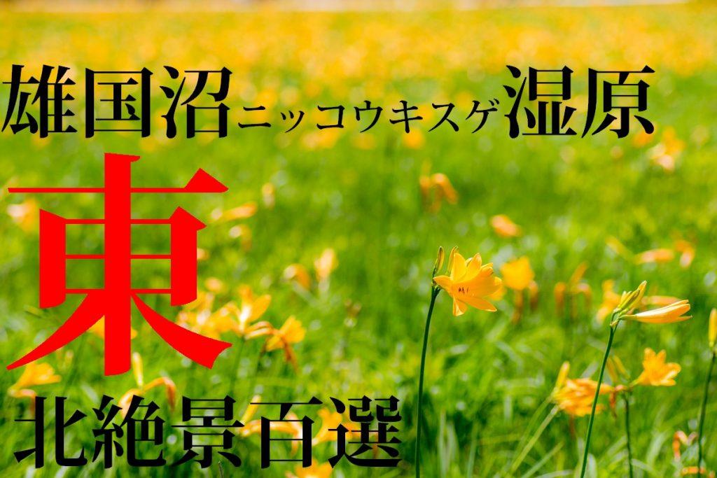 雄国沼ニッコウキスゲ湿原(表紙用)