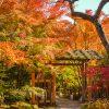 2018年円通院のライトアップ前に日中の紅葉を撮る!