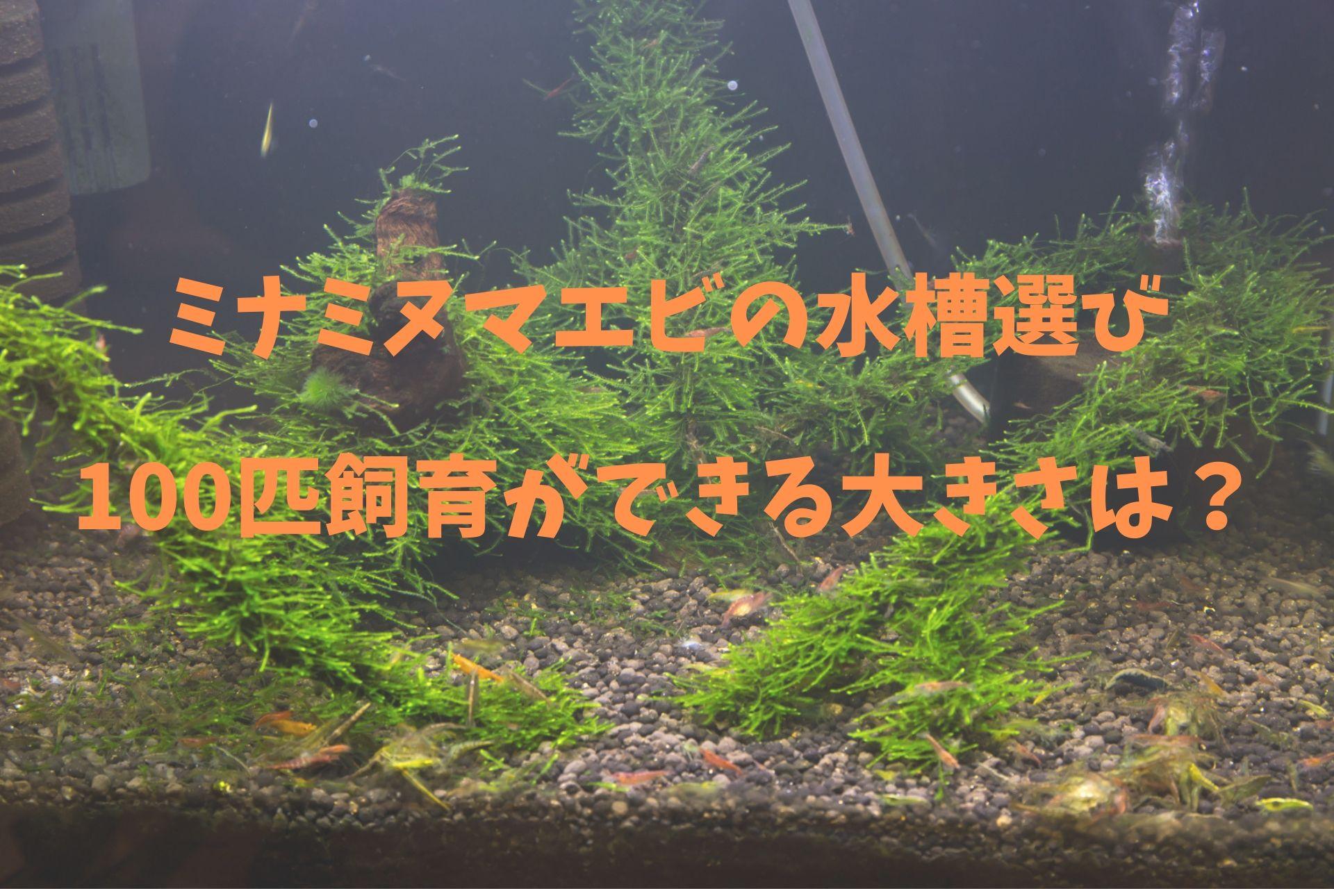 ミナミヌマエビの水槽選び100匹飼育ができる大きさは?